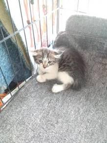 Kucing untuk free adoption