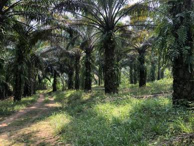 5 Acre Palm Oil Land At Semenyih