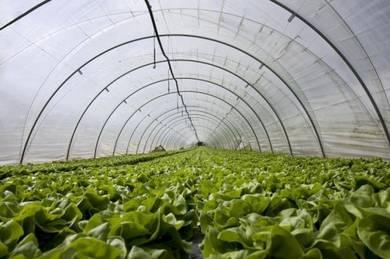 Plastik UV Greenhouse Rumah Pelindung Hujan (RPH)