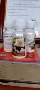 Antibiotik Kucing
