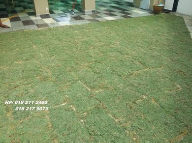 Rumput Seuma Jenis ada Potong Pokok