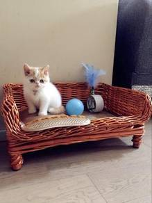 Rattan Pet Nest Washable Cat House, Sangkar Kucing