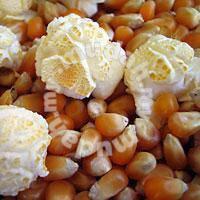 Mushroom popcorn kernel guni