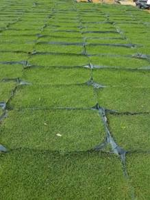 Pembekal rumput 75sen & pakej landskap bangi
