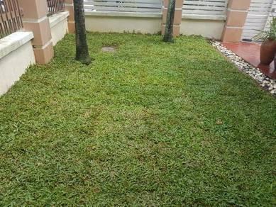 Sevices Tanum rumput pokok artificial potog pokok