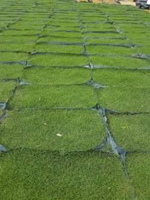 Pakej tanam rumput :supply rumput 75sen rawang