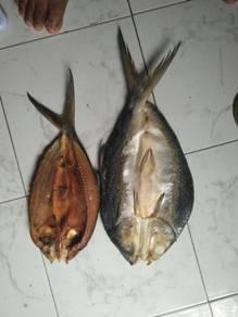 Ikan bolu bandeng/susu tanpa tulang
