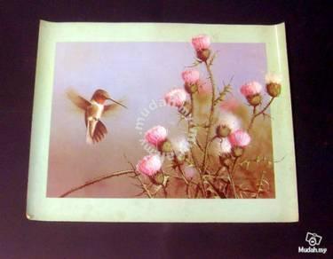 Poster - Hummingbird - Paul J. Lopez