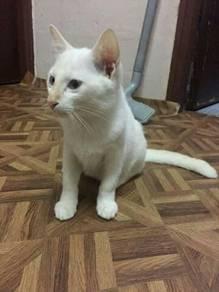 Kucing Free adoption