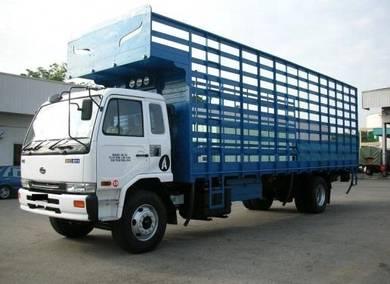 UD Trucks PKD211RN Chicken Carrier