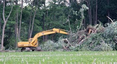 Clearing pro & Bersih kebun & Bersih Garden durian