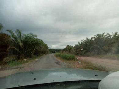 Tanah kelapa sawit