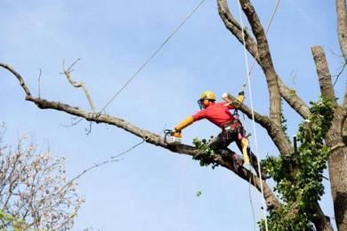 Potong pokok & Tebang pokok & Trim pro
