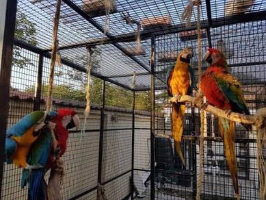 Teture vickey macaw parrots