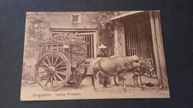 Antik Postcard Carting Pineapple 1911 PC 1665