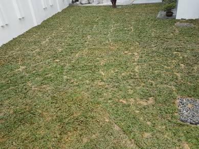 Kedmatan tanam rumput jenis al Rumput Artificial