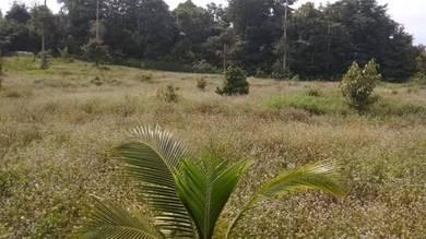 Tanah Pertanian 1.28 ekar Freehold dusun durian baru tanam di Kg Sg Ma