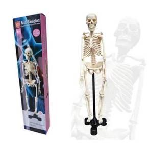 Mini Skeleton (ITSC-036)