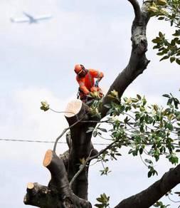 Potong pokok & Tebang pokok & Cut tree & Cantas