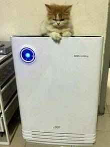 Penapis udara khas kucing 08