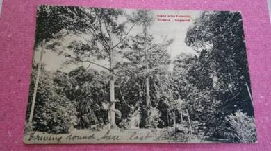 Antik Postcard Botanical England 1917 No 655