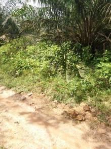 Tanah kelapa sawit di permatang pasir linggi