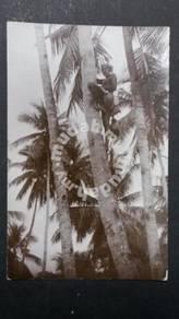 Antik Postcard MALAYA Toddy Tapper 1920s PC 1649