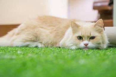 Pemborong Ramadhan 2018 Quality Artificial Grass