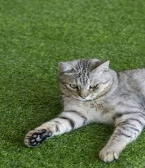 Pemborong Ramadhan Quality Rumput Tiruan Karpet