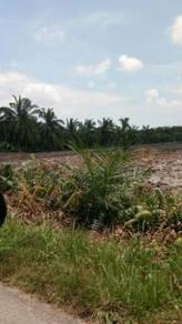 Penyelia Ladang Kelapa Sawit