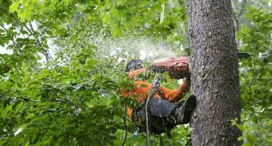 Tree-cutting services (Malaysia)