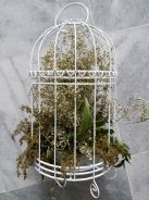 Bird Cage for Deco