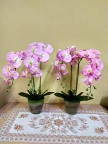 Bunga orkid hiasan