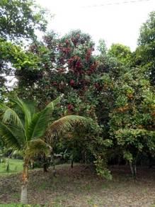 Land at Pekan Nanas, Kampung Sepakat Jaya