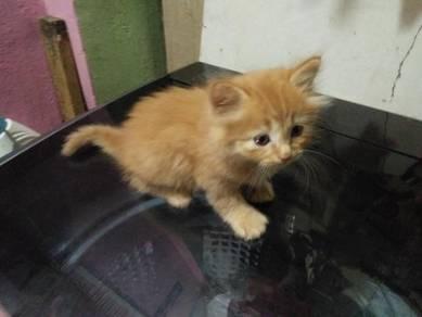 Mix DLH kitten & DLH (dah setahun)