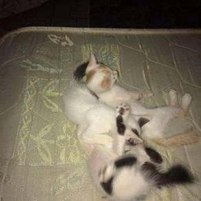 Ibu kucing & anak2