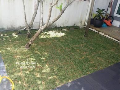 Tanam Rumput tiruan pokok Ada jenis seum Landscap