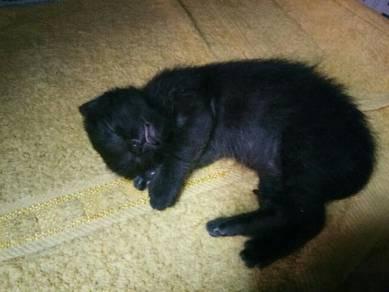 Bby meow utk diadop