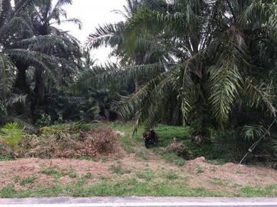 Tanah Pertanian Sungai Kelambu Kuala Langat Banting