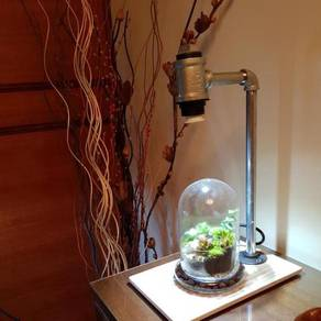 Terrarium with LED pipelight