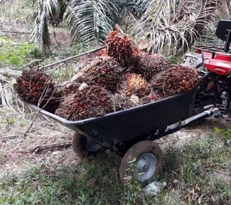 ATV 130cc 2019 (NEW) kl