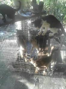 8 Ekor kucing biasa (borong sb mau pindah)