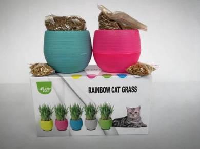 Rainbow Pot Cat Pet Grass