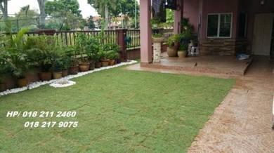 Tanam Rumput Pokok Philippines seumagrass Truan