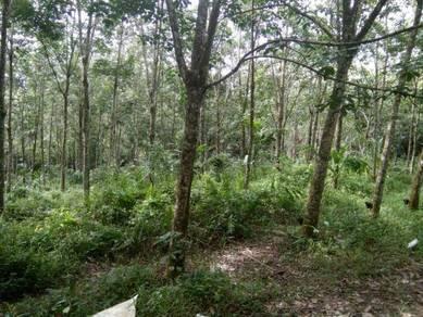 Tanah getah 2 ekar di Karak Pahang