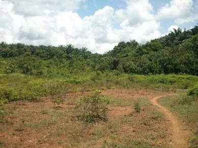 Tanah Pertanian 14.46 Ekar Freehold Malay Reserve, Kulim, Kedah