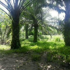 Tanah kebun sawit untuk dipajak