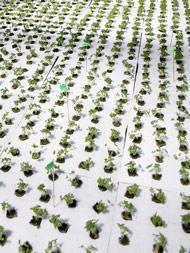 Hydroponic agriculture Styrofoam plant eps PU foam