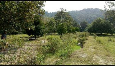 Land For sell Alor Gajah