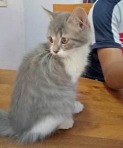 Kitten 3Bulan